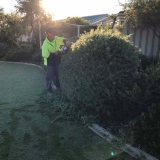 The Garden Fixer | Tree Trimming Services
